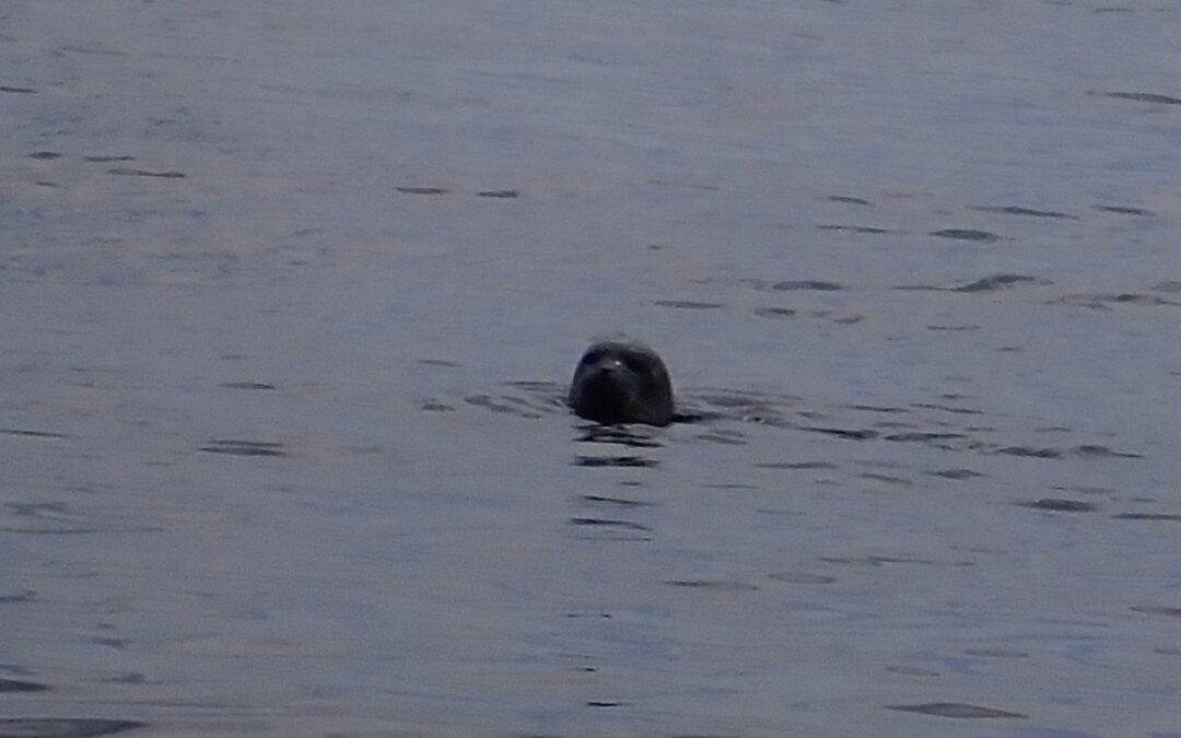 Libra og Hesselø – med lurende sæler og dansende marsvin